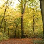 Hillingdon Council buys ancient woodlands for residents