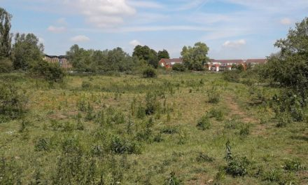 Report concludes homes can go ahead on landfill site
