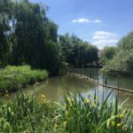 View from the riverbank: Growing pain at SODC
