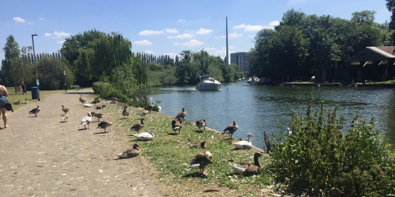 View from the riverbank: Planning's inevitable dilemma