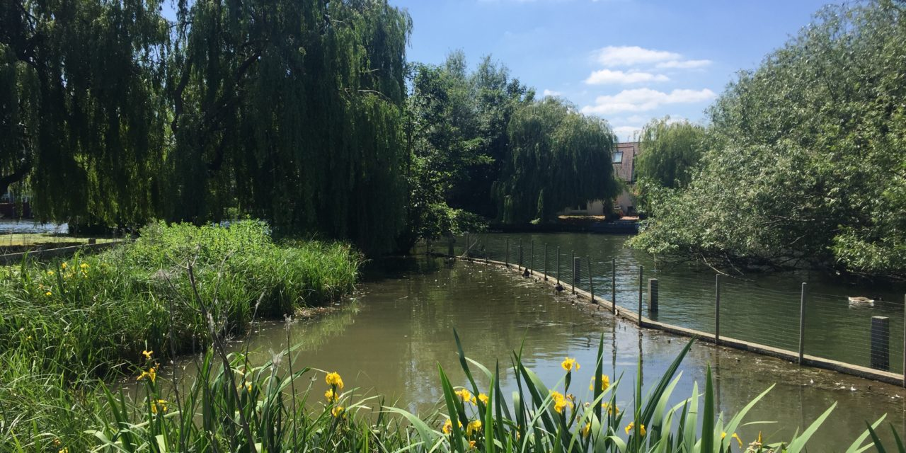View from the riverbank: A glimpse of the future