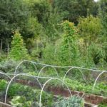 Syon Park allotments saved from Duke of Northumberland's plans